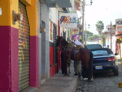 Ajijic horse on the street